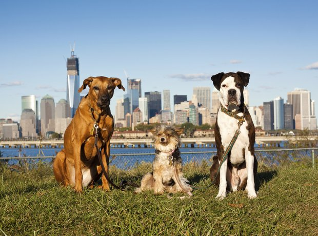 dogs in new york