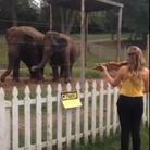 Elephants dancing violin Bach