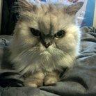 Brahms cat