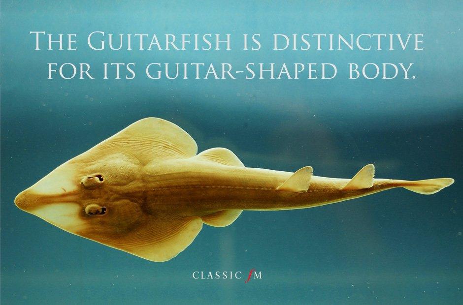 nature classical music