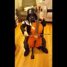 Darth Vader 7 year old cello