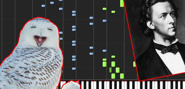 Harry Potter Hedwig theme